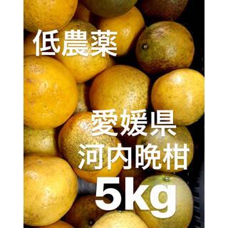 愛媛県 低農薬 宇和ゴールド 河内晩柑 5kg(フルーツ)