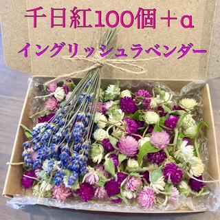 千日紅100個【茎、葉付き】+α・イングリッシュラベンダー【ドライフラワー】(ドライフラワー)