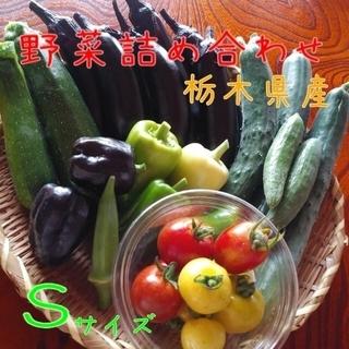 野菜詰め合わせBOX【S】(本日13時まで限定)(野菜)