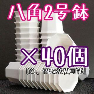 八角鉢 ( 白 ) ◎40個◎ 2号 2寸 プラ鉢  ミニ鉢 シャトル鉢(その他)