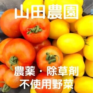 【期間限定】農薬・除草剤不使用のトマト(1.5kg+α)(野菜)