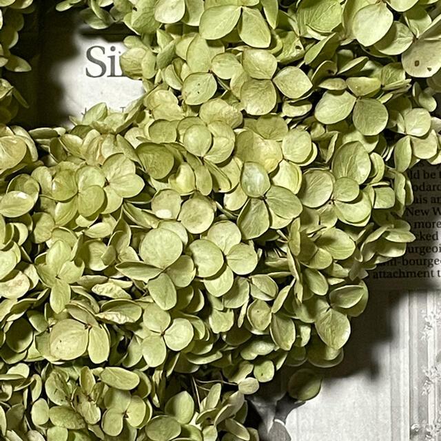 2021.完全無農薬自宅栽培‼️アナベルドライフラワーのリース‼️小 ハンドメイドのフラワー/ガーデン(リース)の商品写真