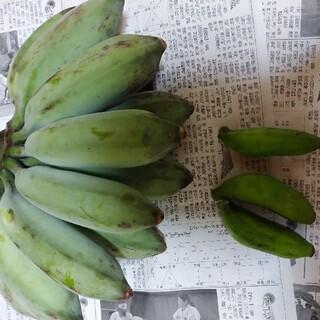 幻のアイスクリームブルーバナナに島バナナ 自然栽培 農薬不使用激レア南国フルーツ(フルーツ)