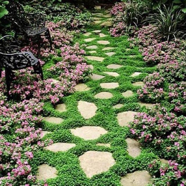 【まき時】【説明書つき】ダイカンドラ ディコンドラ 30g 種子。お試しサイズ! ハンドメイドのフラワー/ガーデン(その他)の商品写真