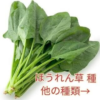 野菜種☆ほうれん草☆変更→カラフル人参 丸オクラ オカヒジキ 黒キャベツ ビーツ(野菜)