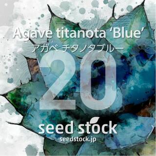 アガベの種 Agave titanota 'Blue' 20粒(その他)
