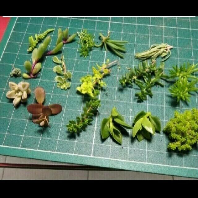 多肉植物 詰め合わせ ハンドメイドのフラワー/ガーデン(プランター)の商品写真