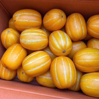 韓国産 メロン 約5kg (フルーツ)