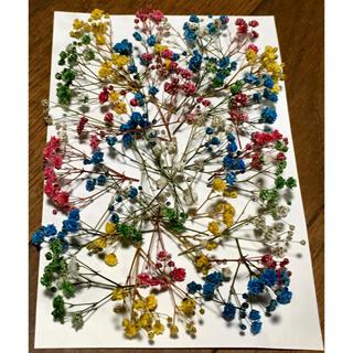 銀の紫陽花が作った可愛い彩りかすみ草のドライフラワー(ドライフラワー)