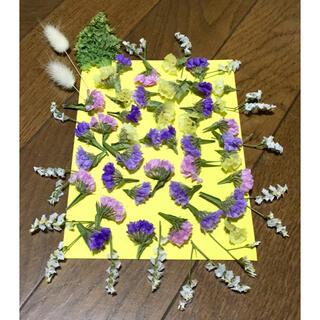 銀の紫陽花が作った可愛い5色のスターチスのドライフラワーお詰め合わせ(ドライフラワー)