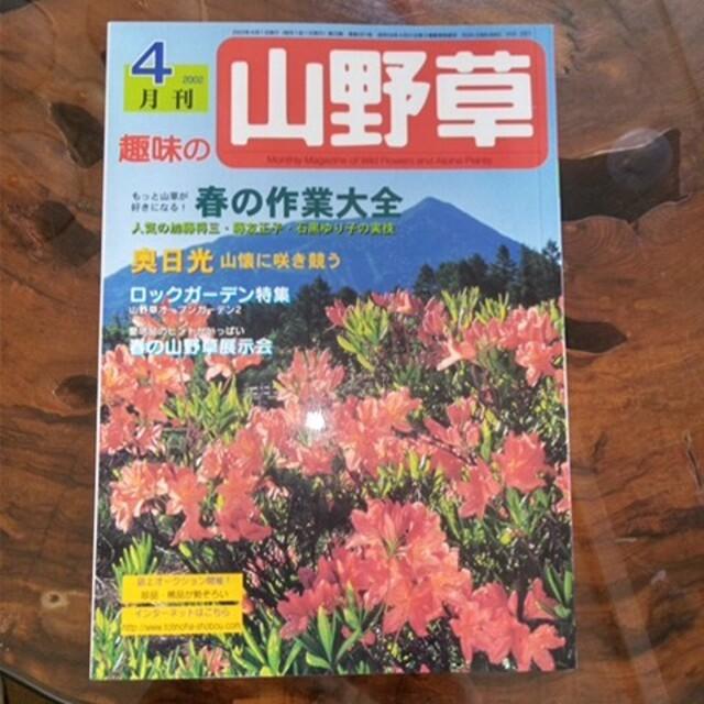 ★  山野草 ハンドメイドのフラワー/ガーデン(プランター)の商品写真