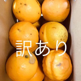 訳あり 小箱 L 2kg 国産バレンシアオレンジ お試し 有田みかん 和歌山県産(フルーツ)