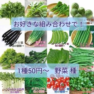 野菜種☆オカヒジキ☆変更→ほうれん草 オカヒジキ ベビーリーフ 春菊 芽キャベツ(野菜)