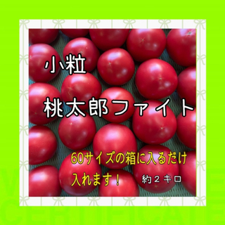 甘い‼️小粒桃太郎ファイト❗️60サイズの箱いっぱいに❗️水曜日発送です。(野菜)