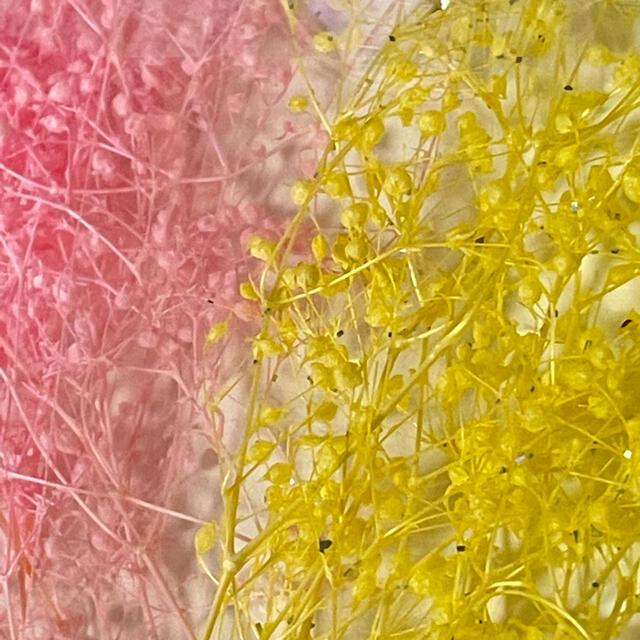 【まとめ買い値引きあり】ドライフラワー かすみ草4色+2 ハンドメイドのフラワー/ガーデン(ドライフラワー)の商品写真