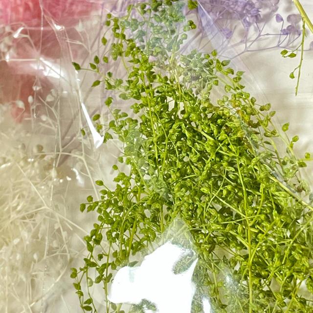 【専用】ドライフラワー かすみ草5色+1 ハンドメイドのフラワー/ガーデン(ドライフラワー)の商品写真