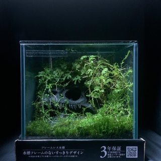 苔 テラリウム 5 〜碧い太古の森〜 【一点物】 夏休み 自由研究(その他)