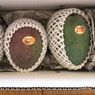 キーツマンゴー 食べ比べ 1キロ(フルーツ)