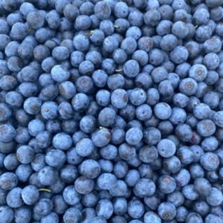 無農薬ブルーベリー 1キロ(フルーツ)