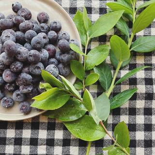 冷凍ブルーベリー 1キロ(フルーツ)