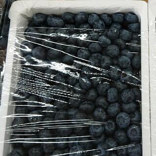 期間限定朝採りブルーベリー1キロ(フルーツ)
