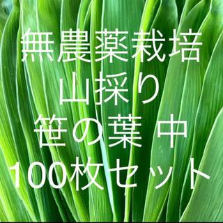 無農薬栽培 山採り 笹の葉 中サイズ 100枚セット(野菜)