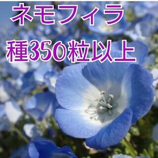 ネモフィラ インシグニスブルー種350粒以上(その他)