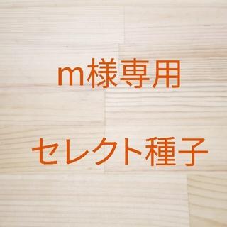 【m様専用】ベビーリーフ種子 B-45 ビート(ルビークイン) 43袋(野菜)