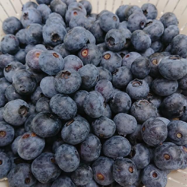 岩手県産 無農薬ブルーベリー 冷凍2キロ 食品/飲料/酒の食品(フルーツ)の商品写真