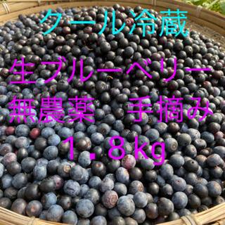 💝お試し価格💝2021年生ブルーベリー1.8kg クール冷蔵送料込(フルーツ)