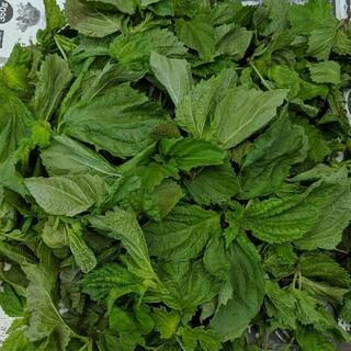 専用 無農薬 青しそ 約200g(野菜)