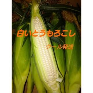 とうもろこし(白)10本(野菜)