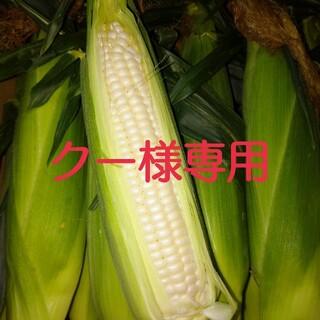 とうもろこし(白)20本(野菜)