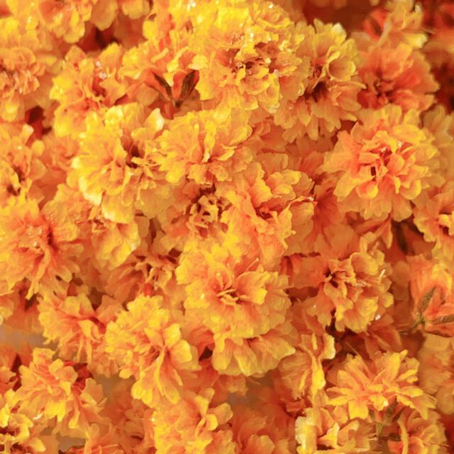 かすみ草 ドライフラワー・オレンジお試し ハンドメイドのフラワー/ガーデン(ドライフラワー)の商品写真