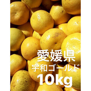 愛媛県 宇和ゴールド 河内晩柑 嵐ゴールド 10kg(フルーツ)
