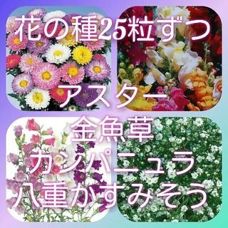 花の種(その他)