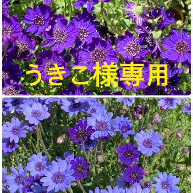 うきこ様専用 ハンドメイドのフラワー/ガーデン(その他)の商品写真