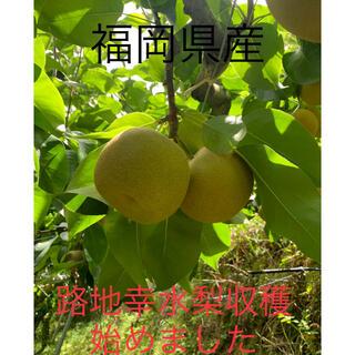 幸水梨訳あり4.5キロ(フルーツ)