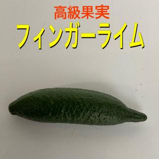 フィンガーライム 1個(フルーツ)
