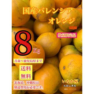 国産 バレンシア  オレンジ 家庭用 訳あり フルーツ 柑橘(フルーツ)