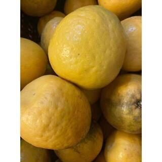 愛媛県産 宇和ゴールド 訳あり ジュース、加工用 10kg(フルーツ)