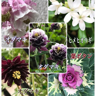 種 花種子 5品種セット(その他)