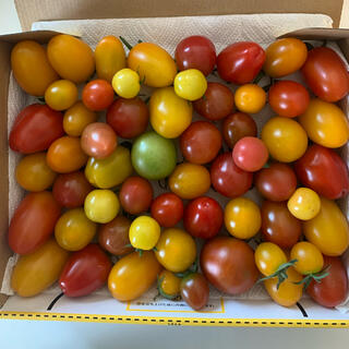 トマト ミックス1キロ(野菜)