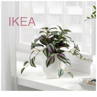 イケア(IKEA)の【新品】IKEA イケア フェイクグリーン ムラサキツユクサ(フェイカ)(その他)