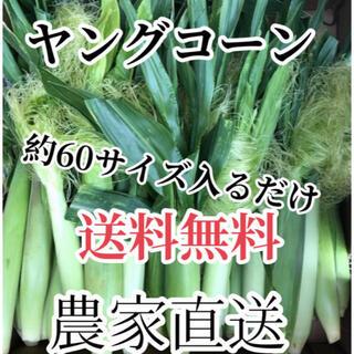 約60サイズヤングコーン2箱(野菜)