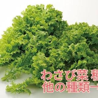 野菜種☆わさび菜☆変更→カラフル人参 スイスチャード つるむらさき(野菜)
