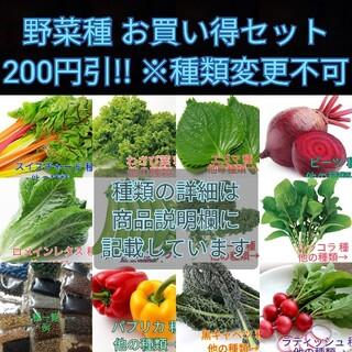 野菜種☆わさび菜 ベビーリーフ 春菊 人参 つるむらさき パプリカ☆変更可(野菜)