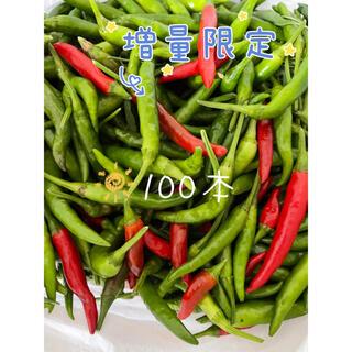 増量限定 無農薬生赤、青トウガラシ 鷹の爪 100本(野菜)