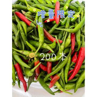 増量限定 無農薬生赤、青トウガラシ 鷹の爪 200本(野菜)