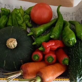 無農薬 野菜セット コンパクトいっぱい(野菜)